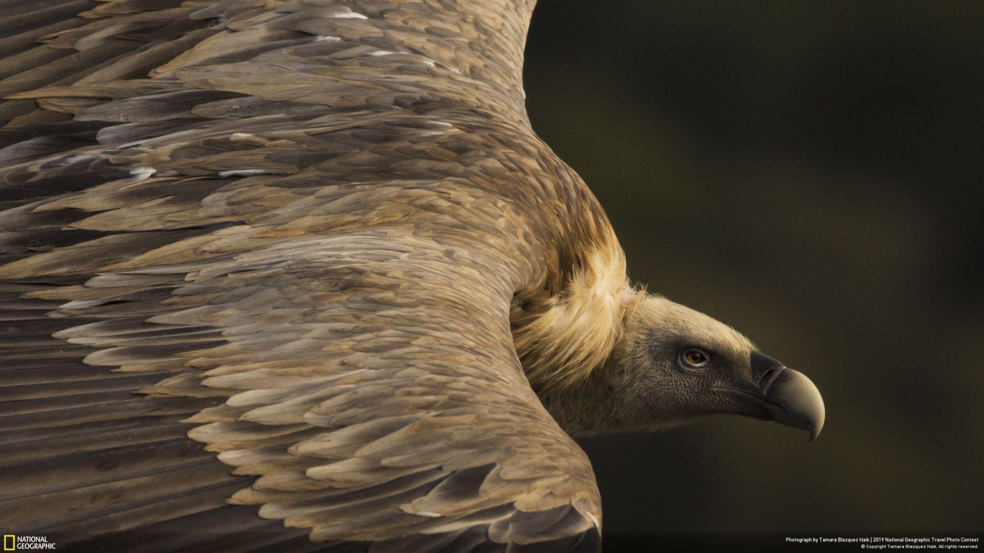 """""""Нежни очи"""" (Tamara Blazquez Haik/Your Shot/National Geographic) - прво место во категорија """"Природа"""""""