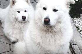 Наши миленици: Ари и Луна