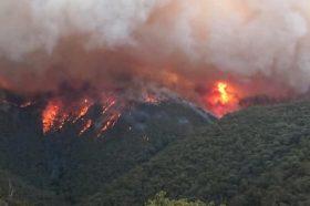 Три лица загинаа откако во Австралија се урна авион за гаснење пожари