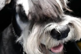 Наши миленици: Буцко, синот на господин Живко