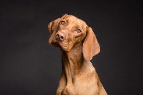 Тука можете да дознаете дали кучето умира во некој филм