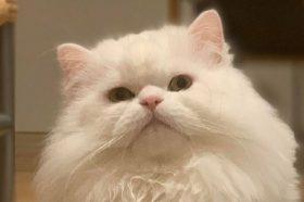 Наши миленици: Маца Лукас, вистински позер!