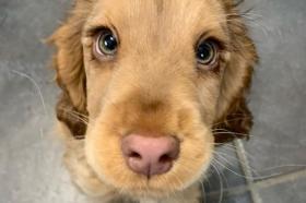 Ова е кутрето со најслатките очи на светот! (ФОТО)