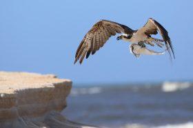 Топлотниот бран создаде дамка: Над милион морски птици угинаа над Тихиот Океан