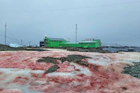 На Антарктикот снегот има крваво црвена боја, а беше измерена и највисоката температура досега! (ФОТО)