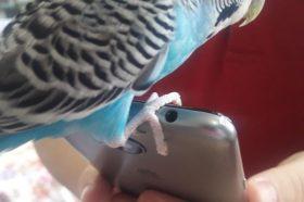 Наши миленици: Папагалчето Коко