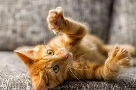Мачките добро знаат како да се забавуваат и се вистински мајстори за лудории во домот! (ВИДЕО)