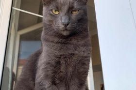 Наши миленици: Мишо