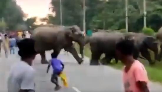 слон индија прегазен