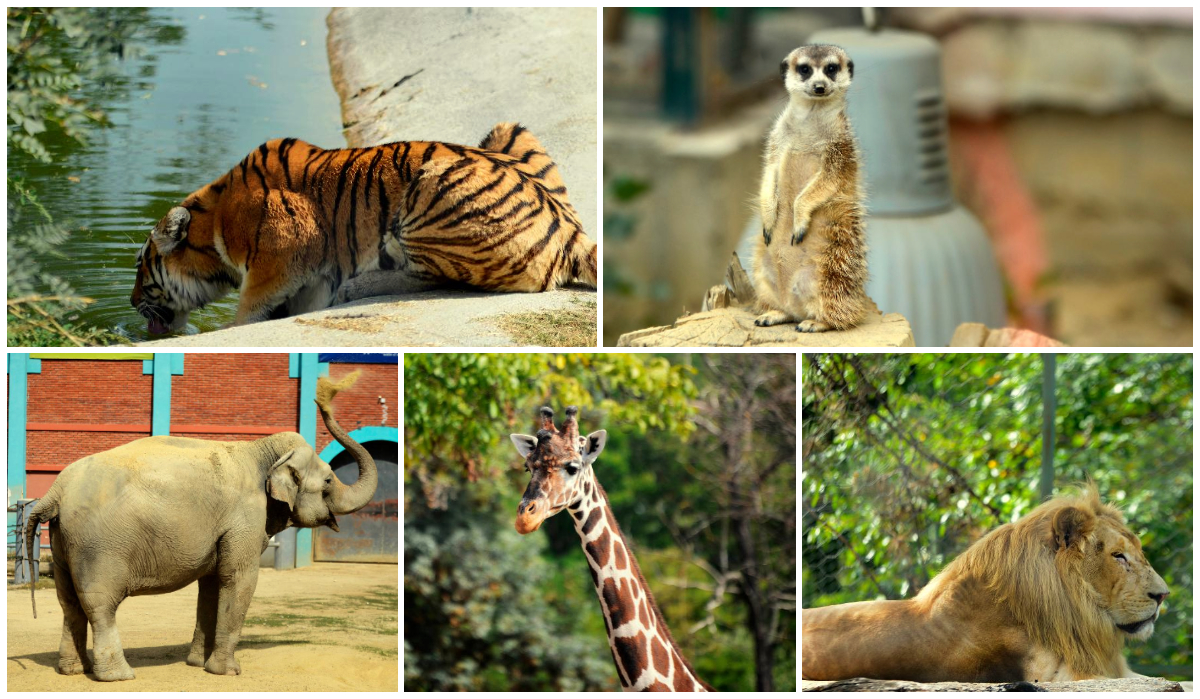 зоолошка градина скопје