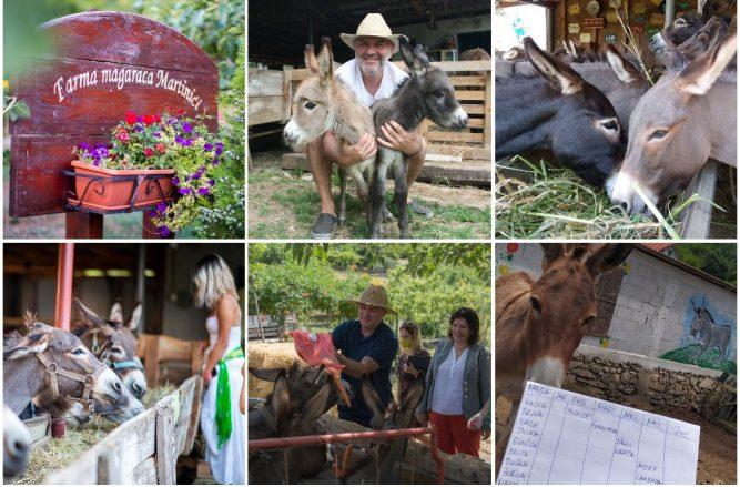 Фарма за магариња Мартиниќи